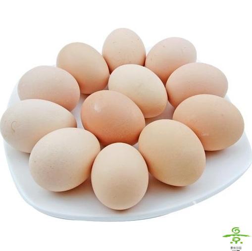 土鸡蛋(8个装)
