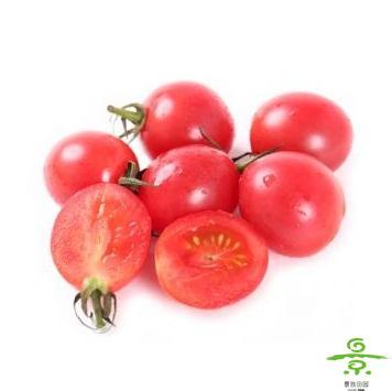 小红番茄148
