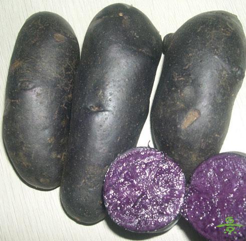 紫土豆(小)