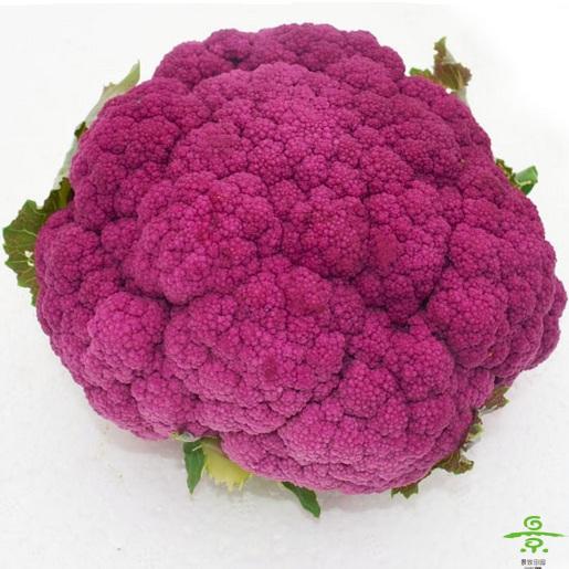 花菜(紫)