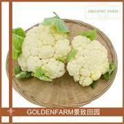 花菜(白)
