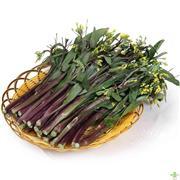 紫冠青菜苔