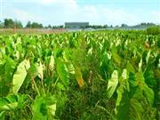 每日农事 | 除草,用嘴巴和眼睛来判断食物的好坏。