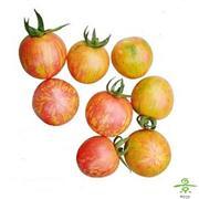 番茄(多彩)