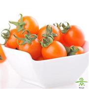小红番茄(小玲)